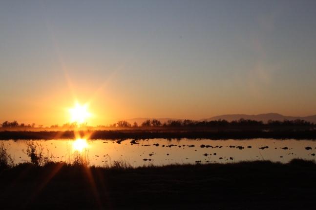Rice field at daybreak