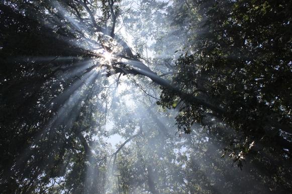 sunrays through tree