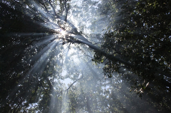 sunrays through tree
